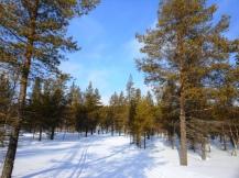 Atravesando un bosque
