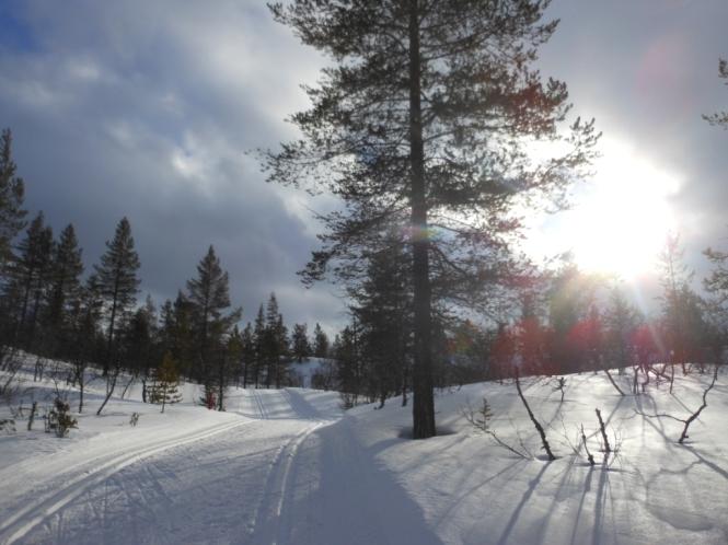 2014-03-Saariselka-Urho-Kekkonen-Dia-7-03