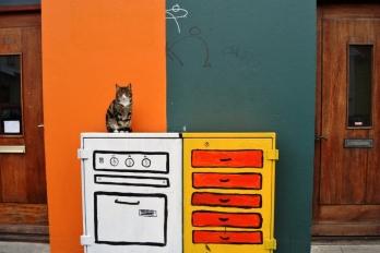 Gato segurata