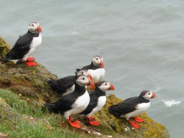 Frailecillos (Puffins)