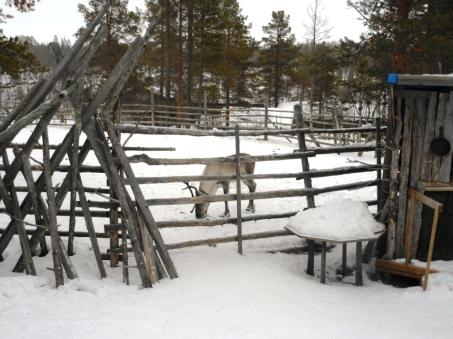 ¡Primer reno del viaje!