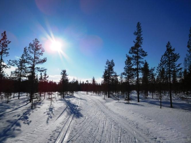 2016, 03 - Dia 2 - 45 km - Aakenustunturi Forests 16