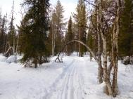 Bosques solitarios