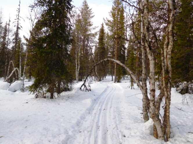 2016, 03 - Dia 3 - 33 km - De Aakenustunturi a Rauhala 13.JPG