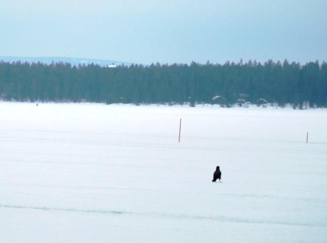 2016, 03 - Dia 4 - 40 km - Särkitunturi Fell 03