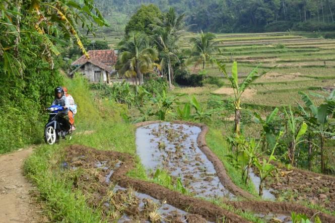 2016-07-cianjur-campos-arroz-02