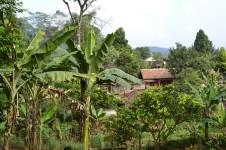 Villa rural de Cianjur