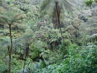 Parque Nacional Gunung Gede Pangrango