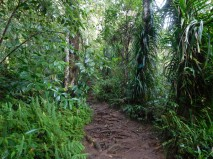 Trekking del Gunung Rinjani - Descenso