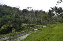 Campos de Arroz de Jatiluwih