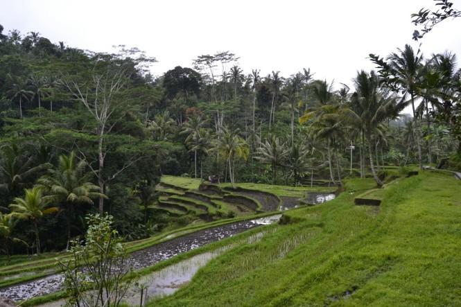 2016-07-jatiluwih-terrazas-arroz-01