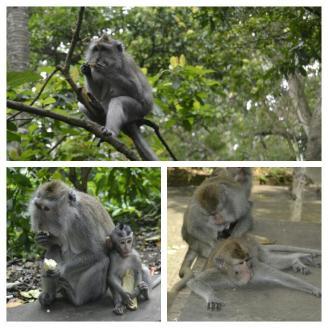 Bosque Santuario de los Monos de Ubud