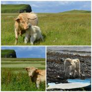 Isle of Skye - Waternish Peninsula