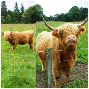 Fort Augustus - Coos