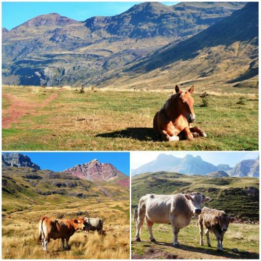 2016-09-Pirineo-Aguas-Tuertas-04.jpg