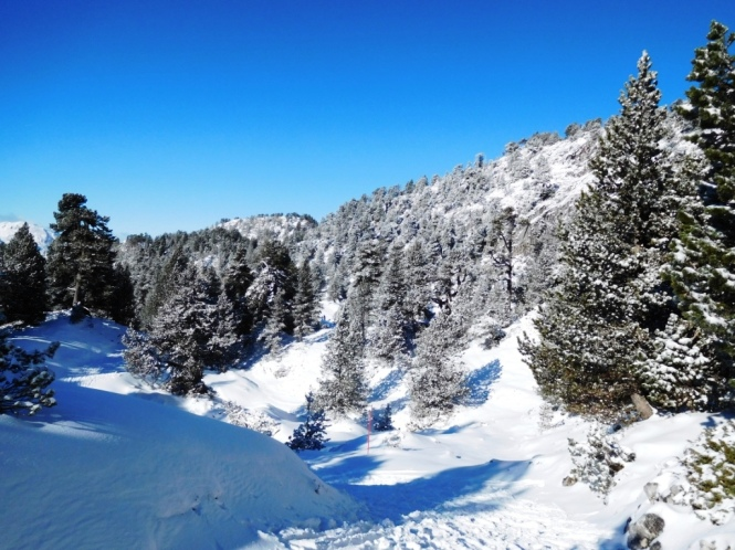 2016-12-esqui-de-fondo-la-contienda-pista-3-4.JPG