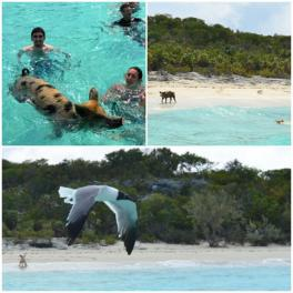 Exuma Cays - Big Major Cay