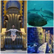 Paradise Island - Acuario de Atlantis