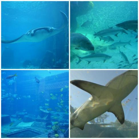 2012-04-bahamas-paradise-island-acuario-interior-2.jpg