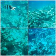 Snorkel con Corales