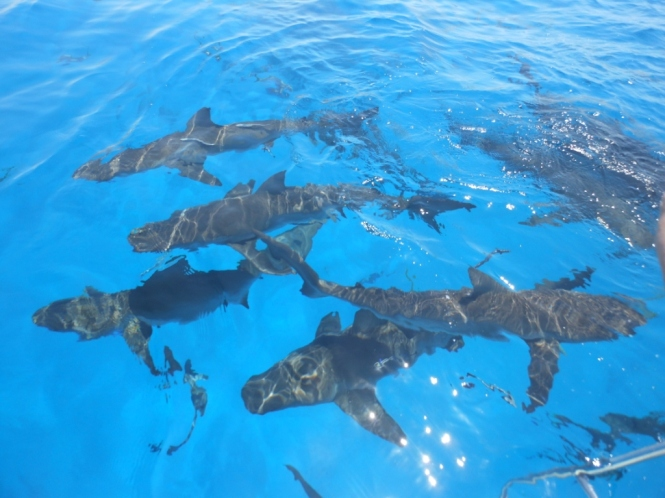 2012-04-bahamas-snorkel-tiburones-1