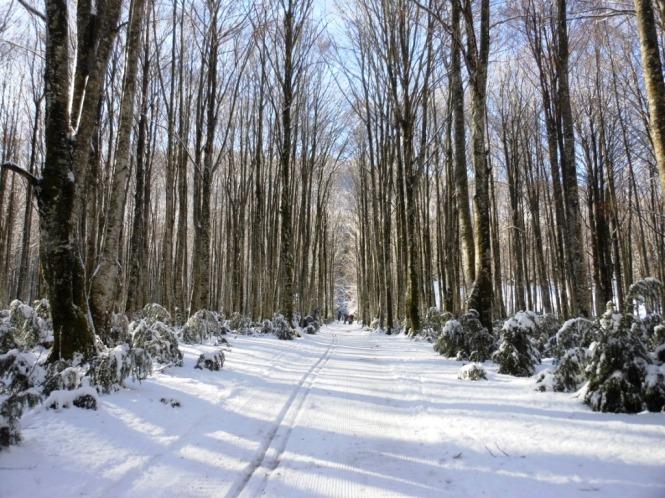 2017-01-esqui-de-fondo-mata-de-haya-bosque-6.JPG