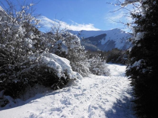 2017-01-esqui-de-fondo-mata-de-haya-llano-3.JPG