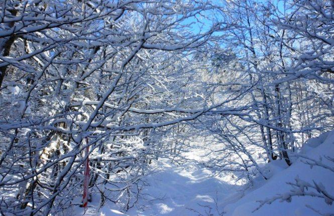 2012-12-el-ferial-belagua-raquetas-bosque-nevado.JPG