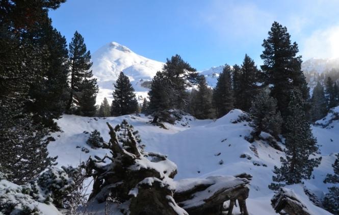 2017-01-la-contienda-bosque-pinos-2.JPG