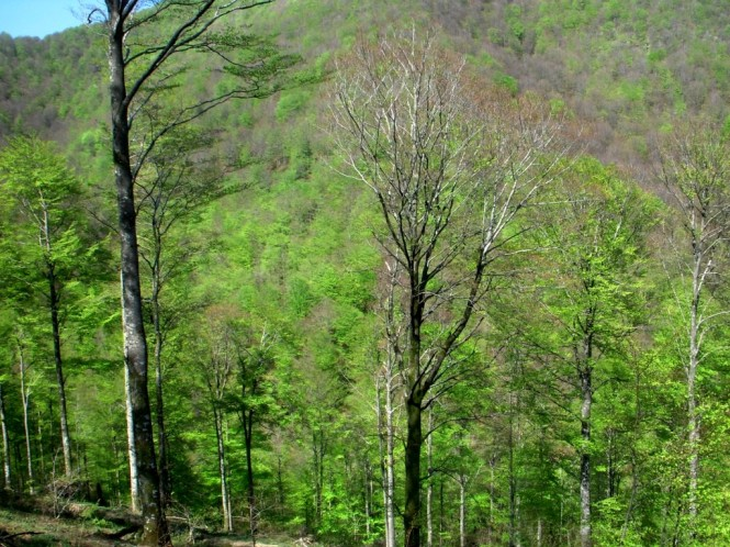 2011-04-leurtza-soratxipi-bosque-1.JPG