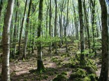 Bosque junto al Dolmen
