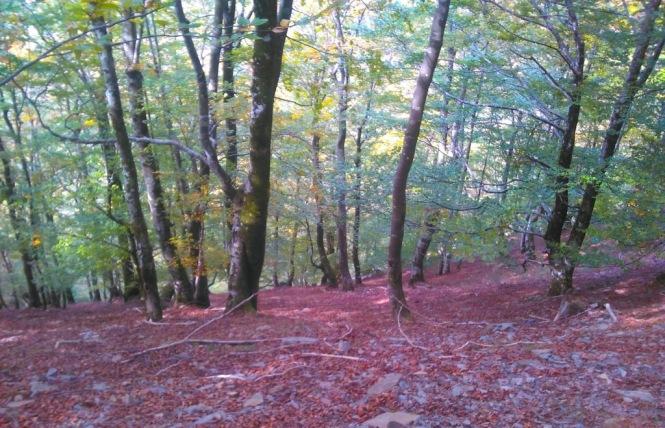 2011-04-mendaur-bosque-1.jpeg