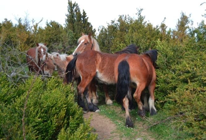 2015-05-eugi-azegi-vuelta-caballos.JPG