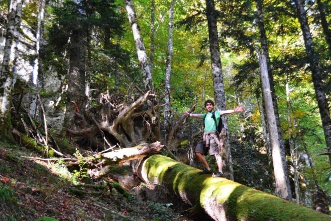2015-10-selva-de-irati-ruta-casas-irati-bosque-1.JPG