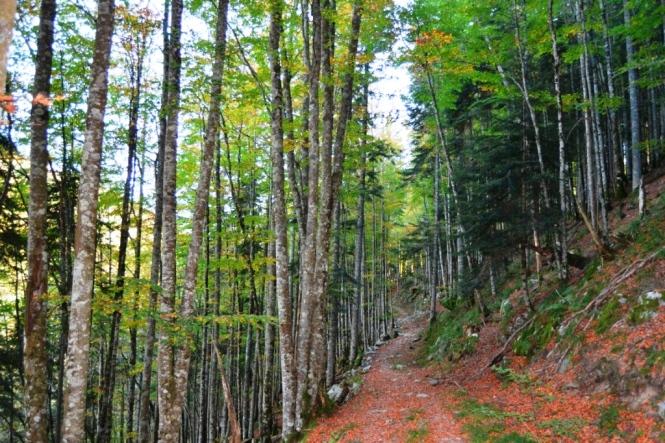 2015-10-selva-de-irati-ruta-casas-irati-bosque-2.JPG