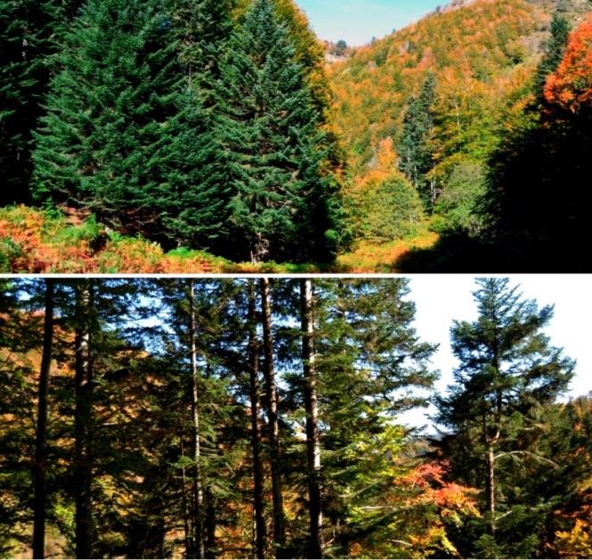 2015-10-selva-de-irati-ruta-casas-irati-bosque-3.JPG