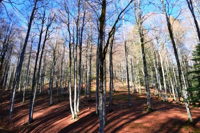 2015-10-selva-de-irati-ruta-casas-irati-bosque-4.JPG