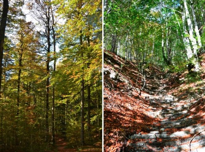 2015-10-selva-de-irati-ruta-casas-irati-bosque-5.JPG
