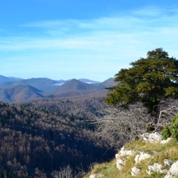 Dos Recorridos por La Selva de Irati