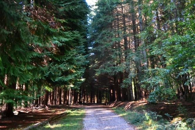 2015-10-selva-de-irati-ruta-embalse-irabia-bosque-2.JPG