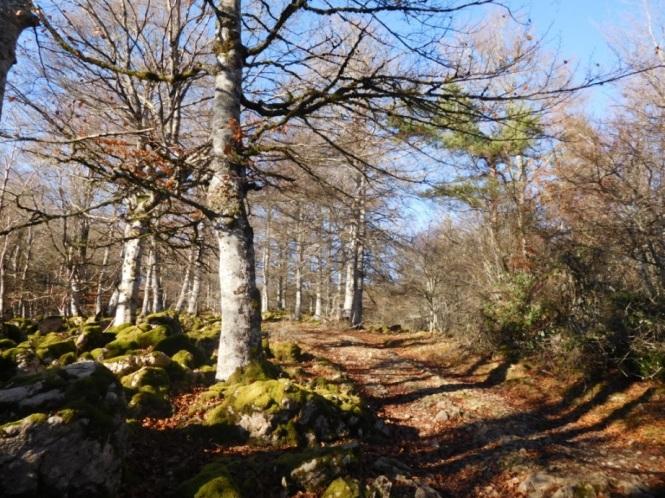 2015-12-aralar-bosque-camino.JPG