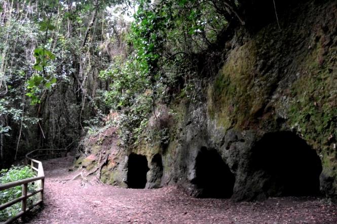 2016-12-tenerife-las-lagunetas-guardianes-centenarios-cuevas-toledo