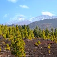 Tenerife 2016 - Volcanes y más Volcanes