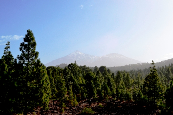 2016-12-tenerife-volcan-chinyero-4-vistas-teide-pico-viejo