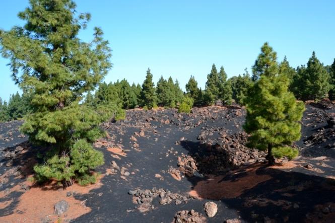 2016-12-tenerife-volcan-chinyero-6