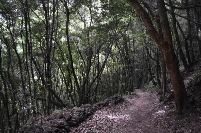 2017-01-la-palma-marcos-y-cordero-bosque-til.JPG