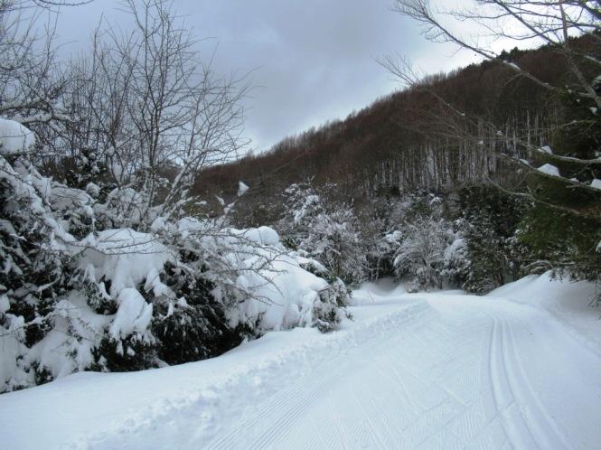 2019-02-esqui-de-fondo-mata-de-haya-la-dronda-4.JPG