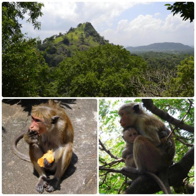 2017-02-sri-lanka-dambulla-cuevas-escaleras-vistas