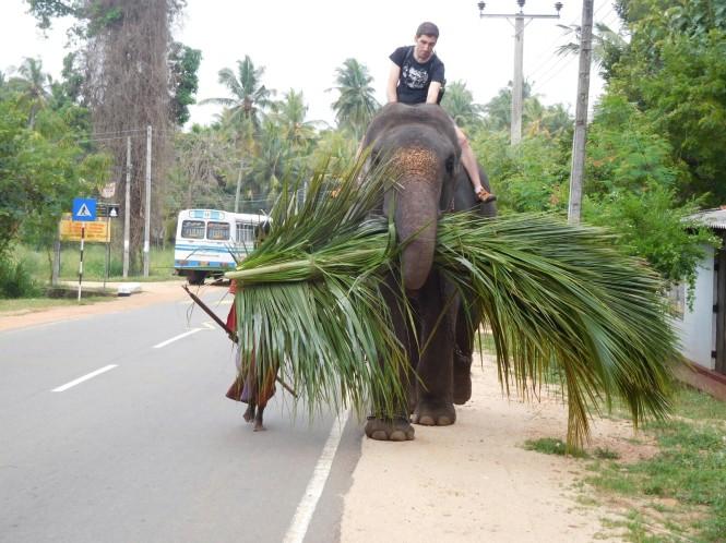 2017-02-sri-lanka-habarana-paseo-elefante-1