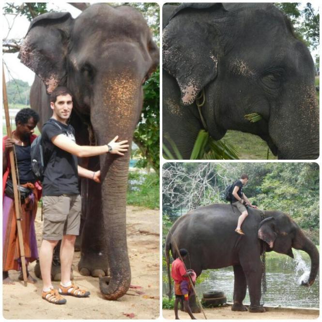 2017-02-sri-lanka-habarana-paseo-elefante-3